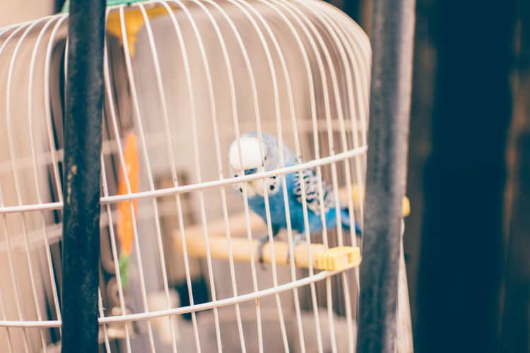 Close-Up Of Bird Perching In Cage