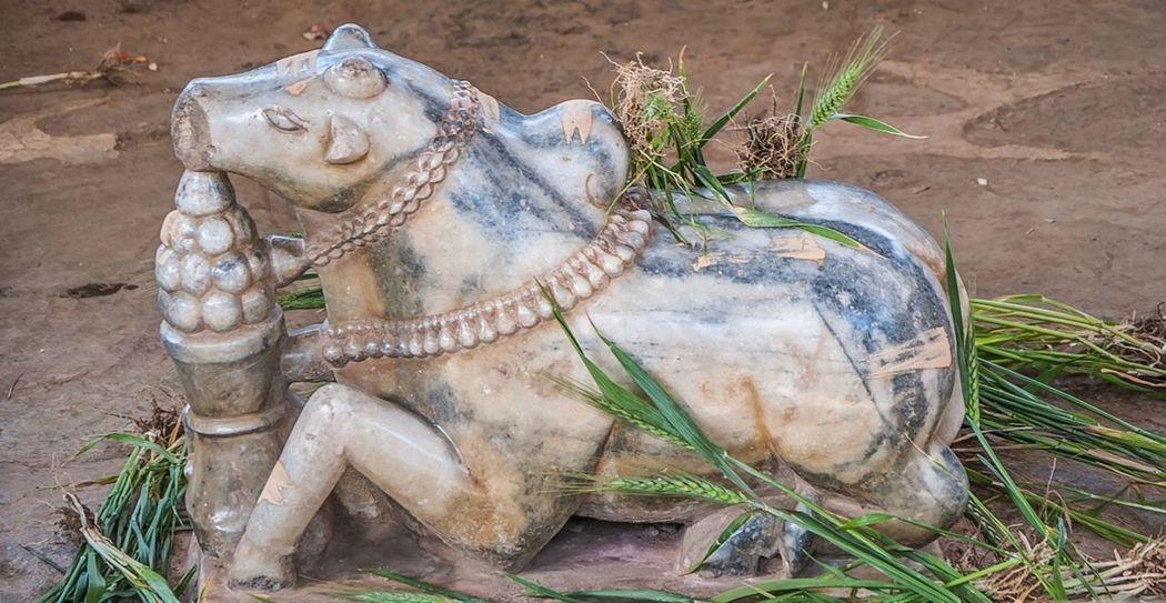 Nandu No People Animal Themes Outdoors Day Close-up Mammal