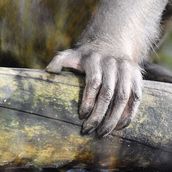 Animal Photography Animals In The Wild Hand Monkey Capturing Freedom Outdoor Photography Nature Protect Wildlife Flora&Fauna Capture The Moment Holding Hand Nails Monkey Part Habitat