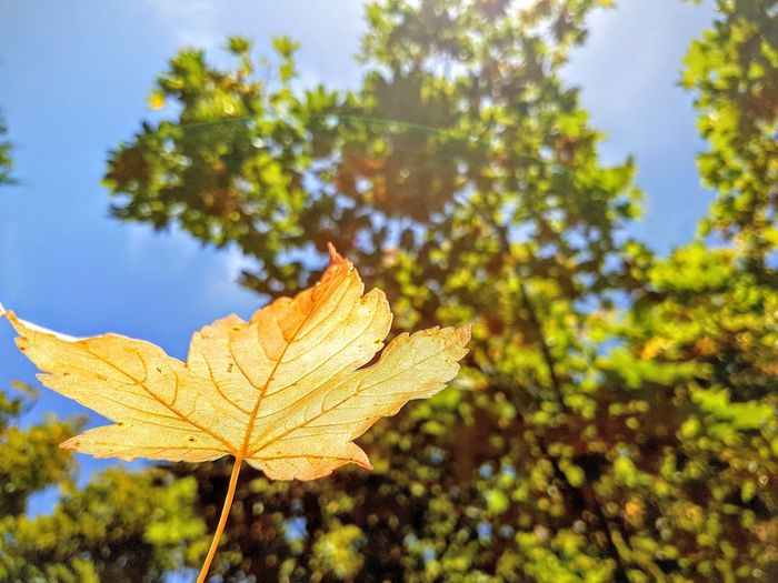 Nature Leaf Tree Autumn Close-up Beauty In Nature Outdoors Sky Change No People Day Growth Fragility Freshness Horizontal