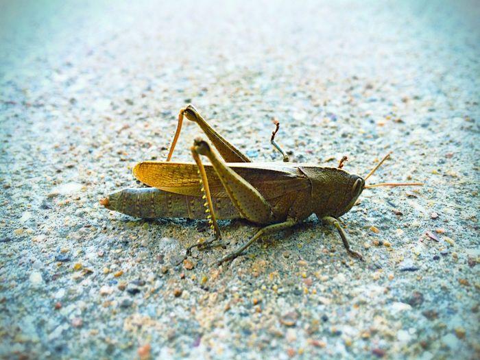 Grasshopper friend First Eyeem Photo Nature Animals Close Up
