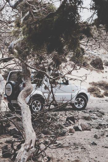 Desert Suzuki