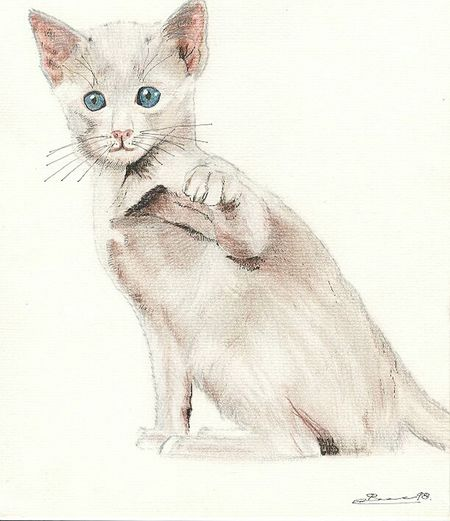 Animal Themes At Home Domestic Cat Personally Draw Crayon Dessin Couleur Dessin Perso