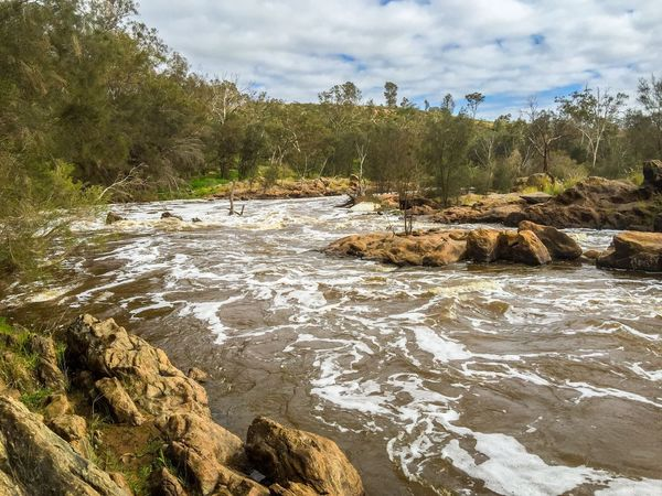 River Rapids Stormy Cloudy River Rapids Nature Swan River Bell Rapids Western Australia Water Riverbank Landscape Outdoors Australia Swan Valley  Trees Rock Geology Rock Formation Downstream Foamy Weather Overcast Scenics Peaceful Rushing Water