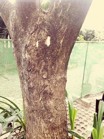 Texture. Tree of life Nuartapp MRSHANELAONG MR.SHANELAONG Com151 Elementsofart