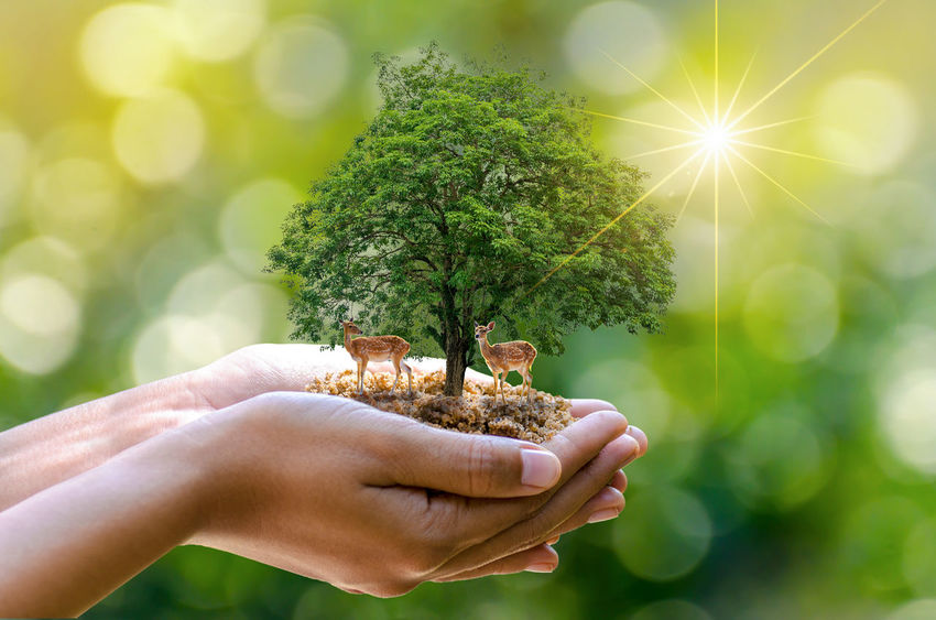 Forest Conservation Concept Beauty In Nature Close-up Day Flower Head Focus On Foreground Forest Conservation Fragility Freshness Green Color Growth Holding Human Body Part Human Hand Lens Flare Nature One Person Outdoors People Plant Real People Sun Sunlight Tree Women