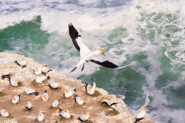 High angle view of birds at beach