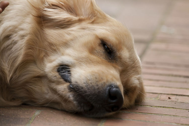 Close-up of dog sleeping on the floor