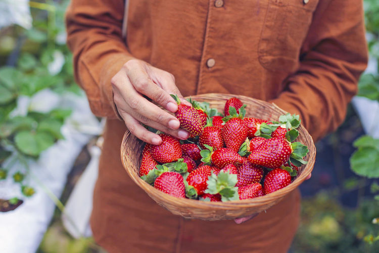 Midsection of man holding strawberries in basket