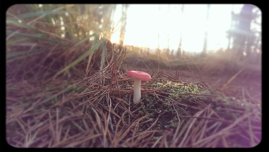 Toad Mushroom Forest Ermelo