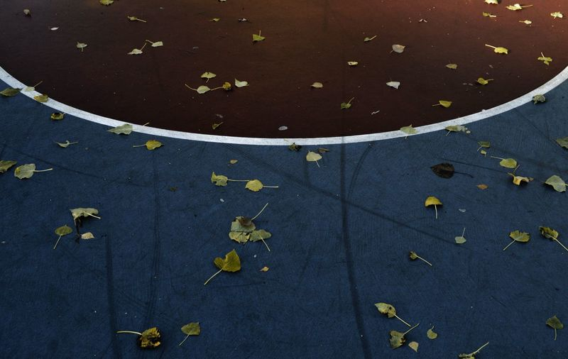 High angle view of dry leaves on basketball court