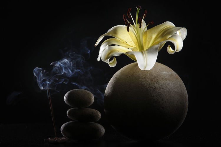 yellow lily on the round vase with black background Flower Flowering Plant Freshness Plant Close-up Lily Lily Flower Floral Petal Nature Summer Blossom White Spring Decoration Color Flora Blooming Bright Bouquet Leaf Green Bud Single Object Pretty Elégance Indoors  Table No People Still Life Flower Head Black Background Fragility Smoke Aroma Aromatherapy