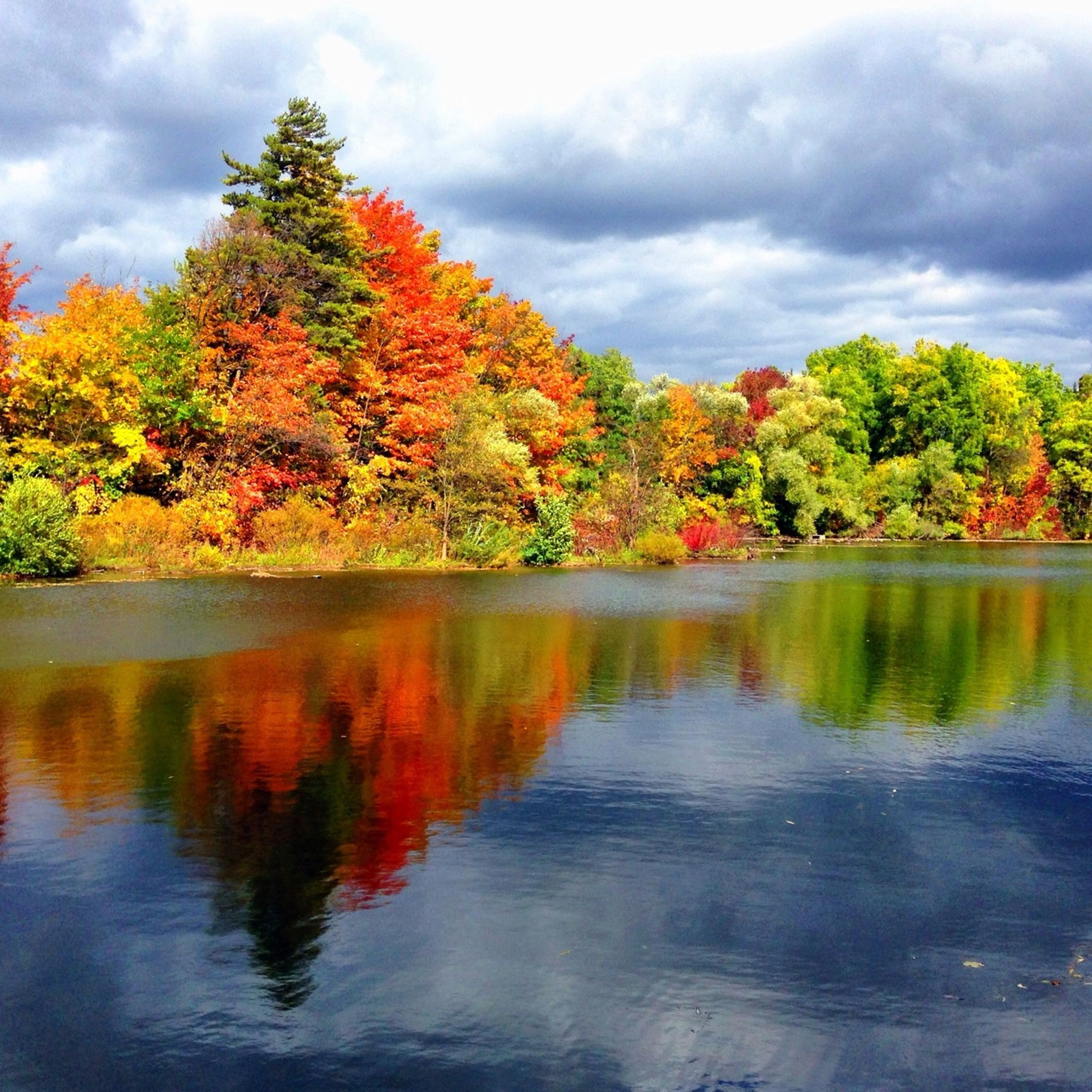 tree, water, sky, cloud - sky, tranquility, autumn, tranquil scene, lake, reflection, beauty in nature, change, scenics, waterfront, cloudy, nature, cloud, idyllic, season, growth, overcast