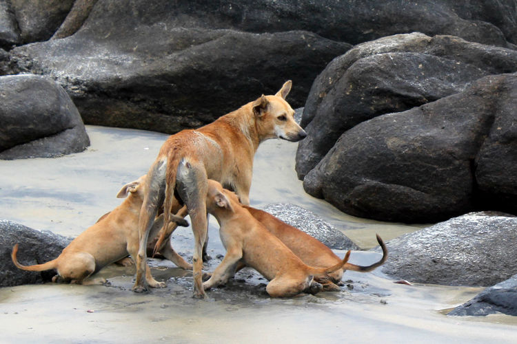 High Angle View Of Dog Feeding Her Puppies