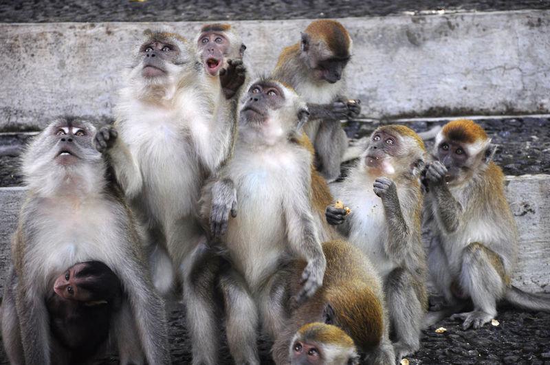 feeding monkey forest ngarai sianok, west sumatera indonesia. Bukittinggi BYOPaper! INDONESIA Monkey Monkey Face Mountain Ngaraisianok Padang The Great Outdoors - 2017 EyeEm Awards The Week Of Eyeem West Sumatera