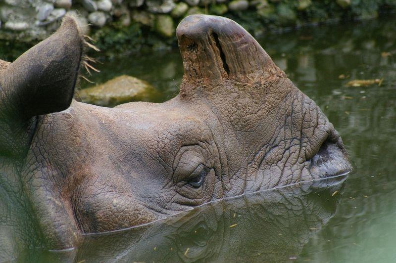 EyeEm Nature LoverRhinos Nashorn Filippa K Asks: What Inspires You?