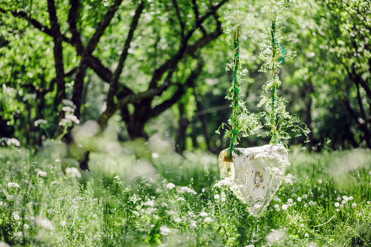 green summer forest and swing with wildflowers. Plant Growth Tree Beauty In Nature Nature Green Color Day No People Flowering Plant Selective Focus Land Flower Tranquility Focus On Foreground Grass Field Outdoors Hanging Park Forest Swing Countryside Village Authentic Moments Authentic