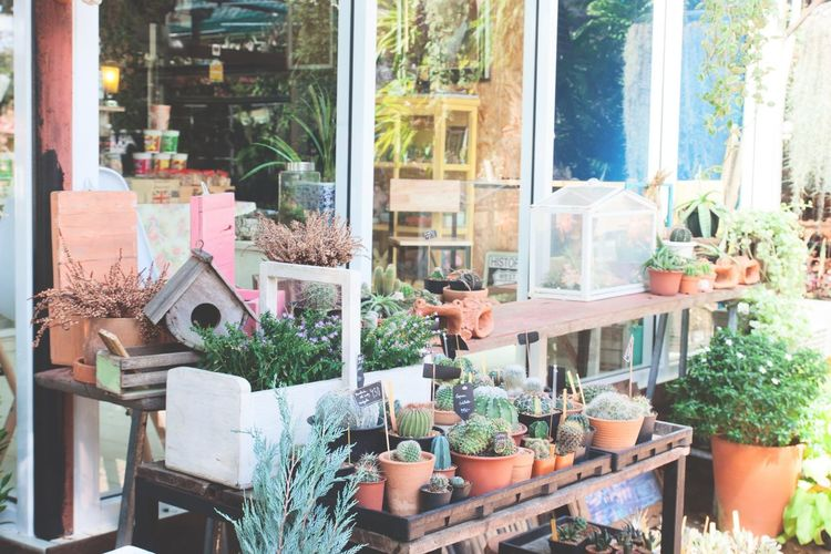 Garden decoration in coffee shop Cactus Choice Coffee Time Day Decoration Garden Gardening Growth Nature Plant Potted Plant Shelf Store Variation Window