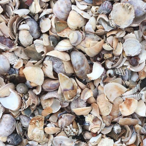 Seaside Seaside Seaside_collection Shells Beachphotography Light Colors Seaside Town Shells Beach Same  Multiple Summer Beach Beach Photography Art