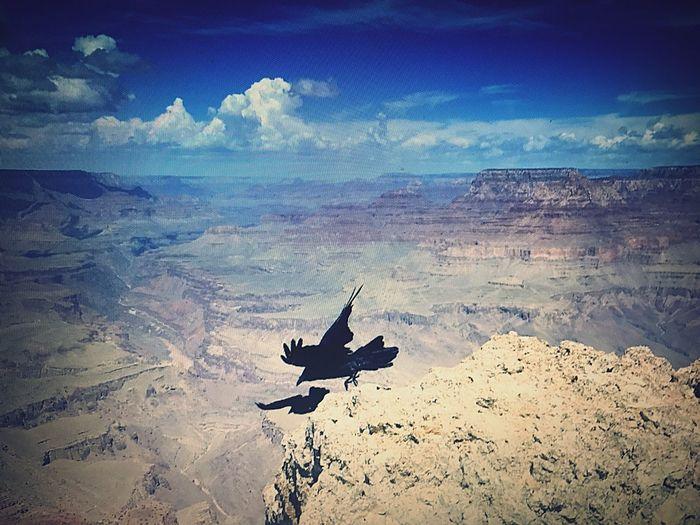 Silhouette birds flying over landscape against sky