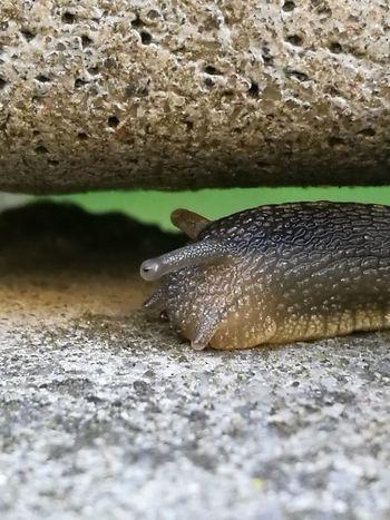 UnderSea Water Slug Full Length Animal Themes Close-up EyeEmNewHere