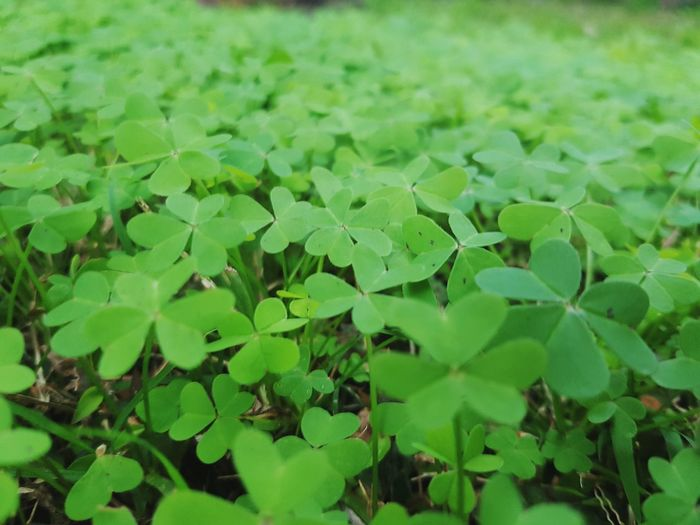 Colour Of Life Foliage Clovers  Up Close Nature Colour Palette Maximum Closeness