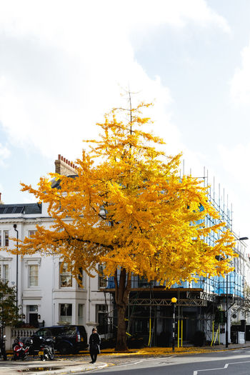 Autumn in London Motor Vehicle Sky Tree Architecture Building Exterior Mode Of Transportation Car Built Structure Autumn Change Transportation Nature Plant Land Vehicle City Building Day Cloud - Sky Outdoors Street No People London Autumn Autumn colors Travel Destinations Autumn Mood