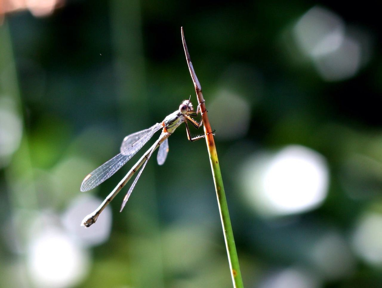 invertebrate, focus on foreground, animal themes, animal, insect, close-up, animal wildlife, plant, one animal, animals in the wild, nature, day, no people, growth, outdoors, green color, plant stem, dragonfly, beauty in nature, animal wing, blade of grass