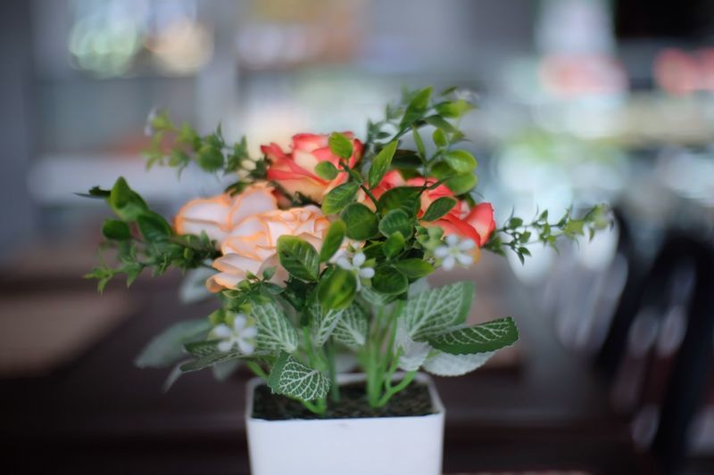 Flower model Plant Growth Freshness Flowering Plant Potted Plant Nature Flower Flower Head