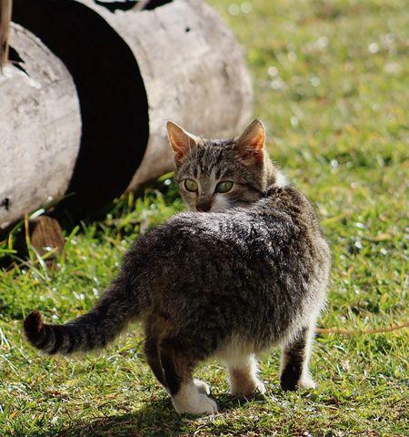 Little cutie <3 Canon Bosnia Bosna Kitten Cat Domestic Cat Animal Themes Mammal Feline Grass Domestic Animals One Animal Outdoors Nature Pets No People