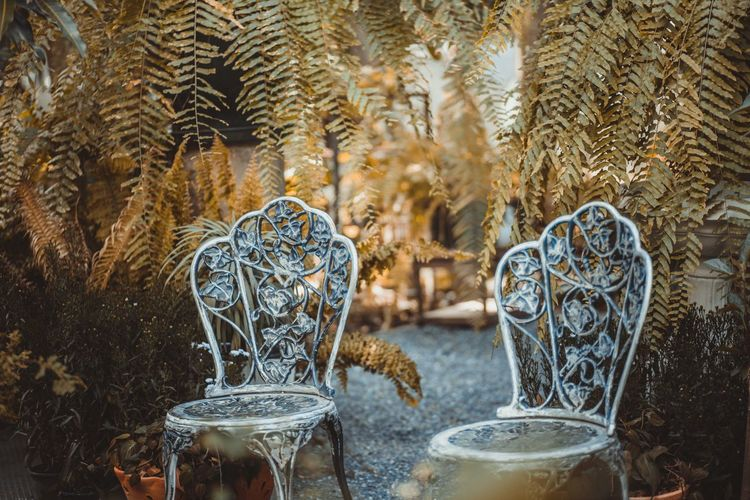 Old Empty Chairs Against Plants