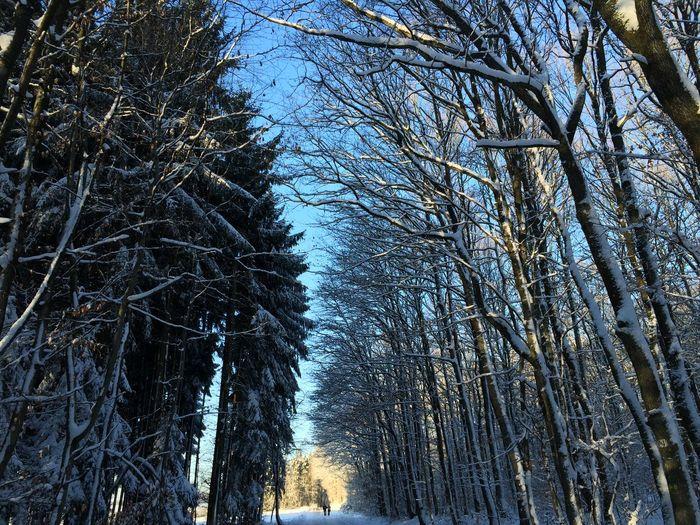 Sunshine Snow Enjoying Life Wintertime