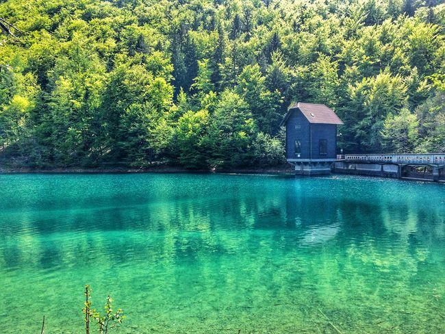 Blue-green EyeEm Nature Lover Water Plant Day Nature Green Color Pool Swimming Pool Reflection Waterfront Lake Turquoise Colored Outdoors