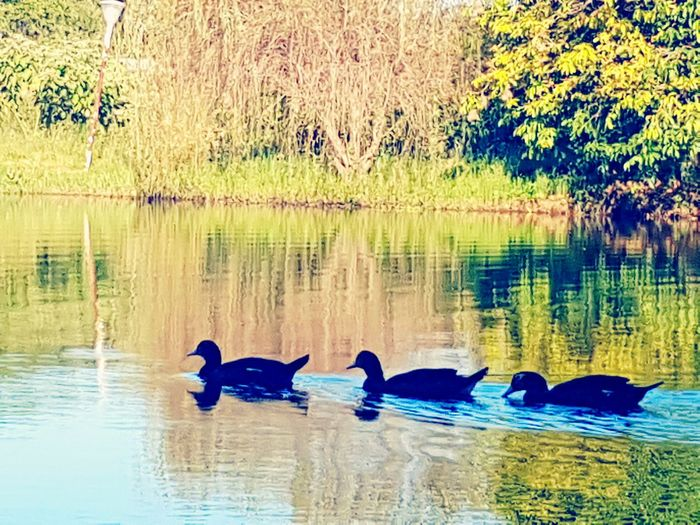 Lake Water Tree Bird Nature Reflection Animals In The Wild Animal Themes No People Outdoors Animal Wildlife Day Beauty In Nature