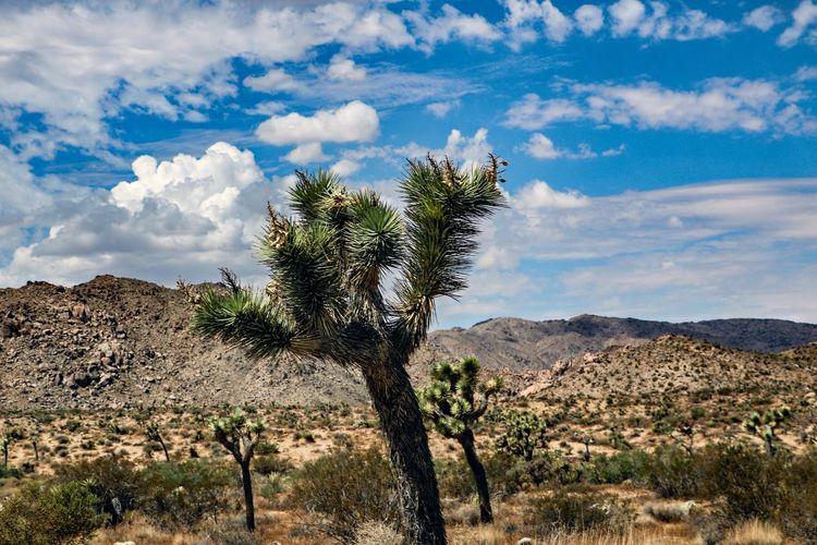 Trees growing in desert against sky
