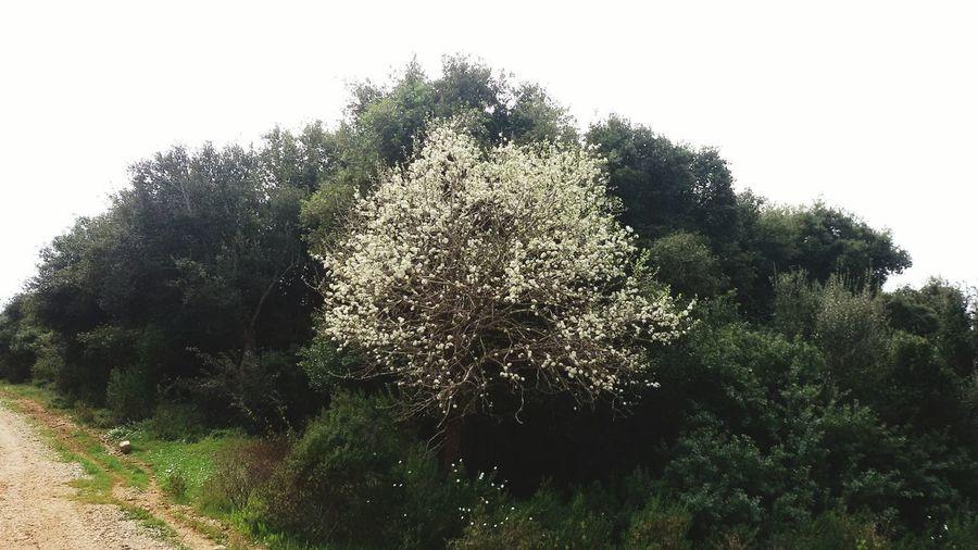 Spring Has Arrived wildtree