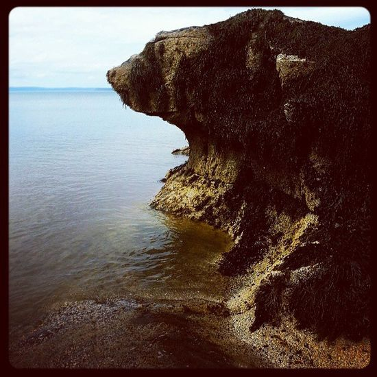 """I call this rock formation """"the lonely bear"""" Nature Bayoffundy"""