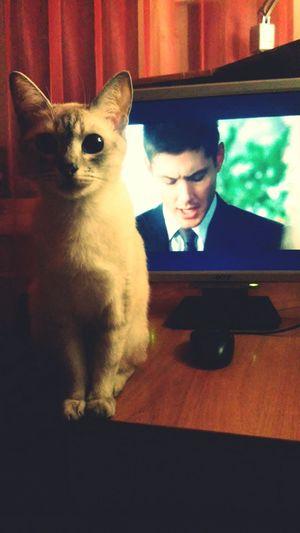 Cat Supernatural Watching Supernatural Din