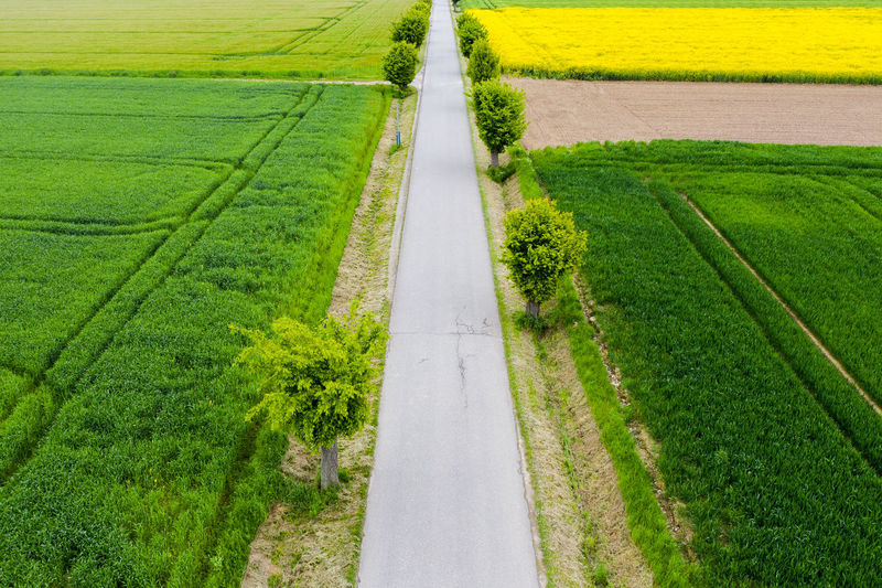 Green Color Plant Road Landscape Rural Scene Agriculture No People Land Transportation Field Growth Grass Environment Nature Direction Day The Way Forward Outdoors Tranquility Tranquil Scene Diminishing Perspective