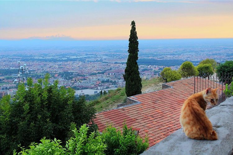 Alone as a cat Ancient Architecture Sunset Cat Mammal Sky Domestic Animals One Animal Domestic Pets Animal Animal Themes Growth Nature Sea No People Beauty In Nature Horizon Over Water Scenics - Nature Plant Vertebrate Water Tree Summer In The City