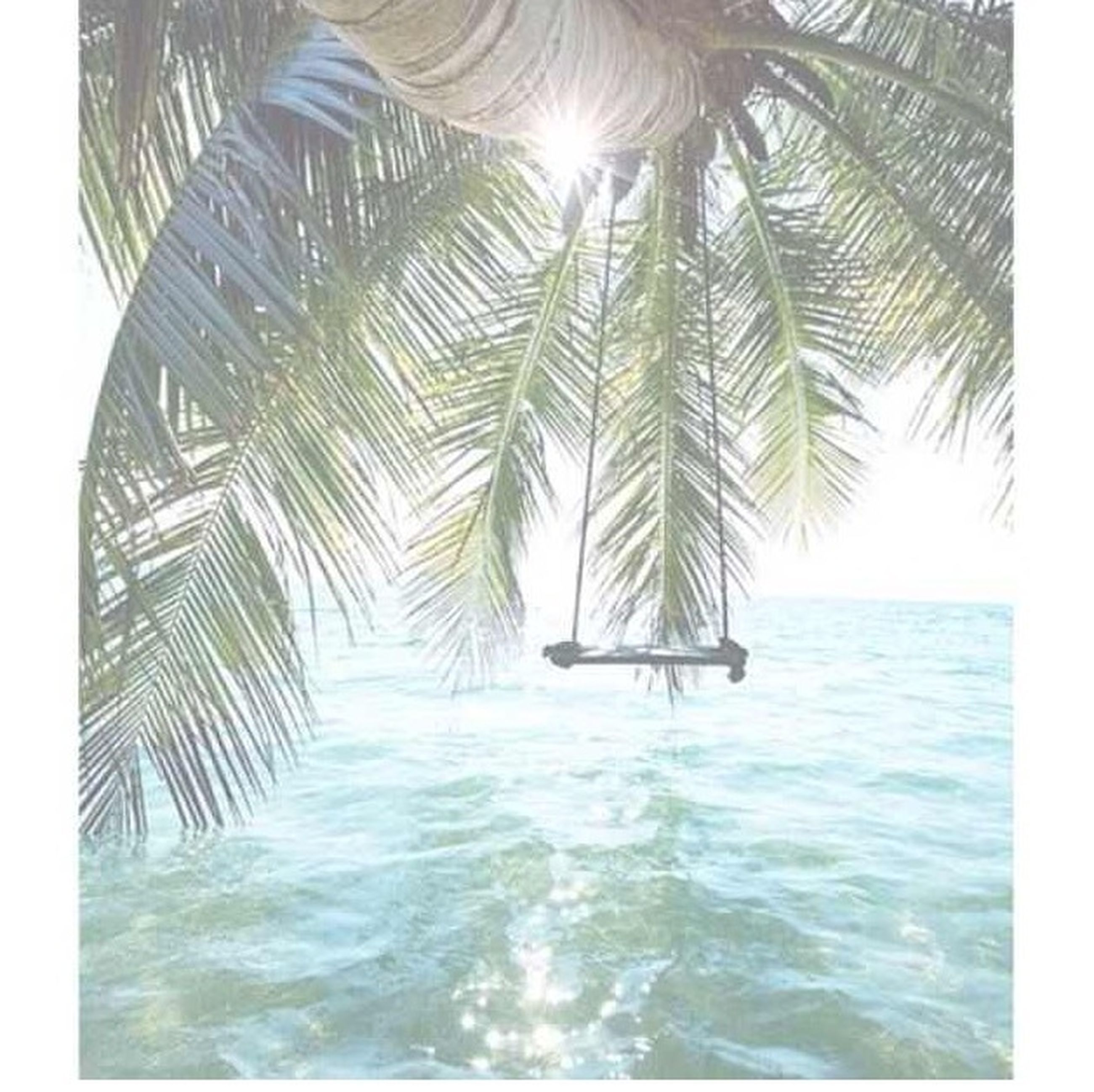 water, waterfront, tree, sea, sunlight, palm tree, rippled, tranquility, nature, beauty in nature, sun, scenics, sunbeam, tranquil scene, sky, day, growth, clear sky, horizon over water, outdoors