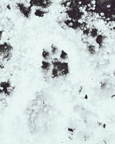 Snow White Color Nature Beauty In Nature Paw Print Frozen Outdoors Ice First Eyeem Photo