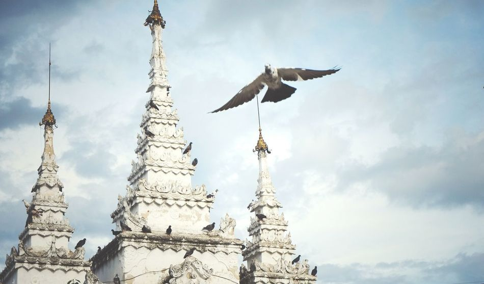 Free bird Hanging Out Check This Out Hello World Relaxing Enjoying Life Streetphotography Urban Exploration Showcase July Capture The Moment Clouds And Sky Pagodas Pagoda Temple Bird Photography Bird Bird Flying Urbanphotography From My Point Of View Bird Fly Animals