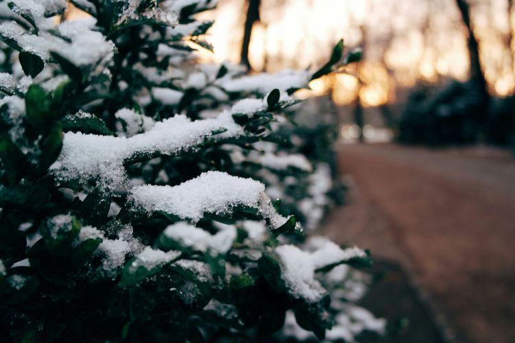 Showcase: November Vscocam Nature_collection Wintertime EyeEm Best Shots Naturelovers Winterwonderland Nature Photography