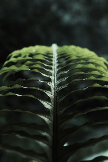 Close-up Leaf Fern Nature Outdoors กระแตไต่ไม้