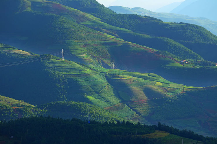 Beautiful landscape of mountain range with beam light in morning at Hongtudi in Dongchuan, Yunnan, Kunming of China Scenics - Nature Tranquil Scene Beauty In Nature Environment Landscape Tranquility Mountain Green Color Plant Land Idyllic Agriculture No People Growth Rural Scene Non-urban Scene Nature Day Tree Field Outdoors Plantation Rolling Landscape China