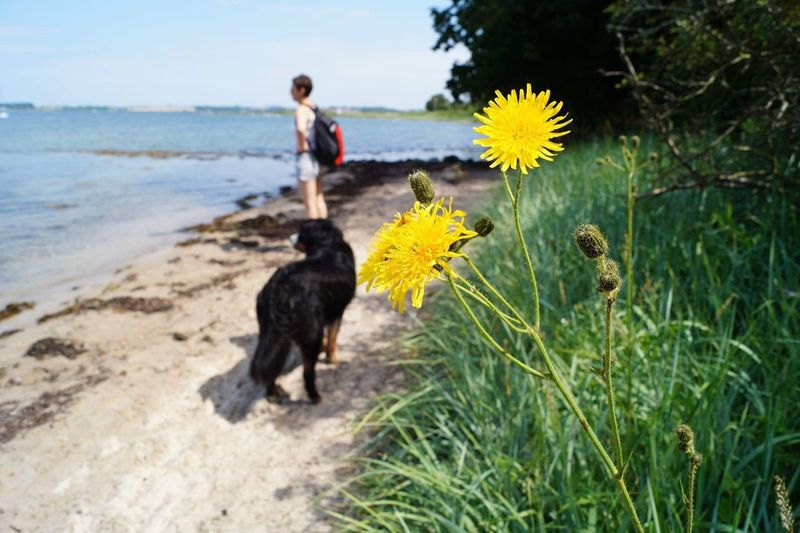 The flower we saw that day Dog Flower Beauty In Nature One Person Day Rural Scene Nature Sky Water Leisure Activity Close-up Yellow Yellow Flower Yellow Color Beautiful Beauty Behind The Flower Beach Traveling Home For The Holidays