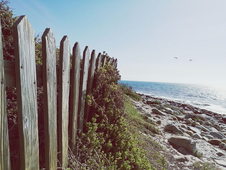 Sea Horizon Over Water Bird Clear Sky Blue Nature Outdoors fence