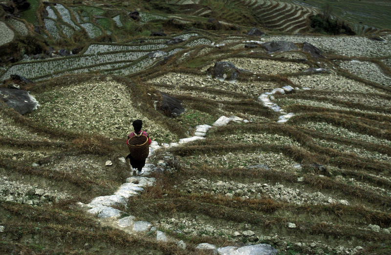 High Angle View Of Person Walking On Terraced Field