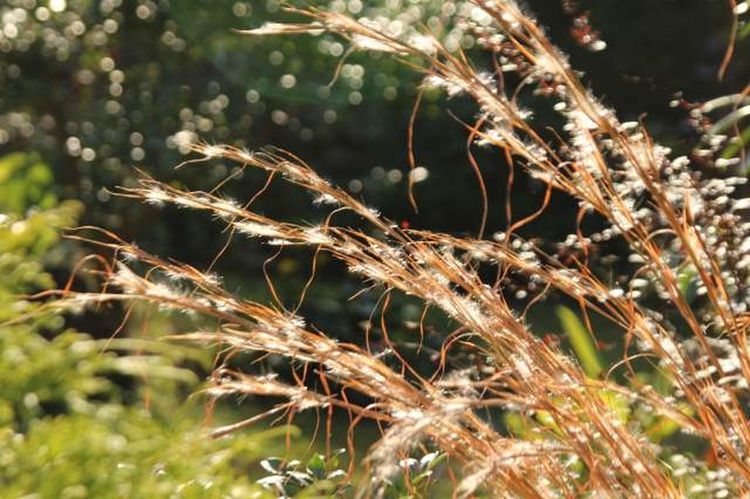 Grass Japan Japan Photography Beauty In Nature Grass Nature No People Outdoors Plant